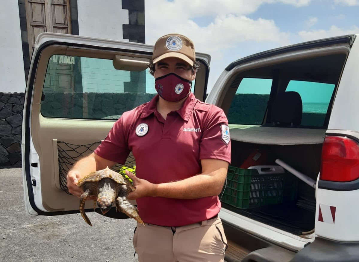 Rescate Tortuga Fuecaliente